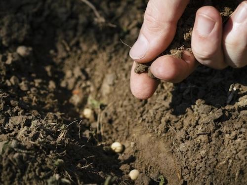 農業従事者の活躍する場つくり